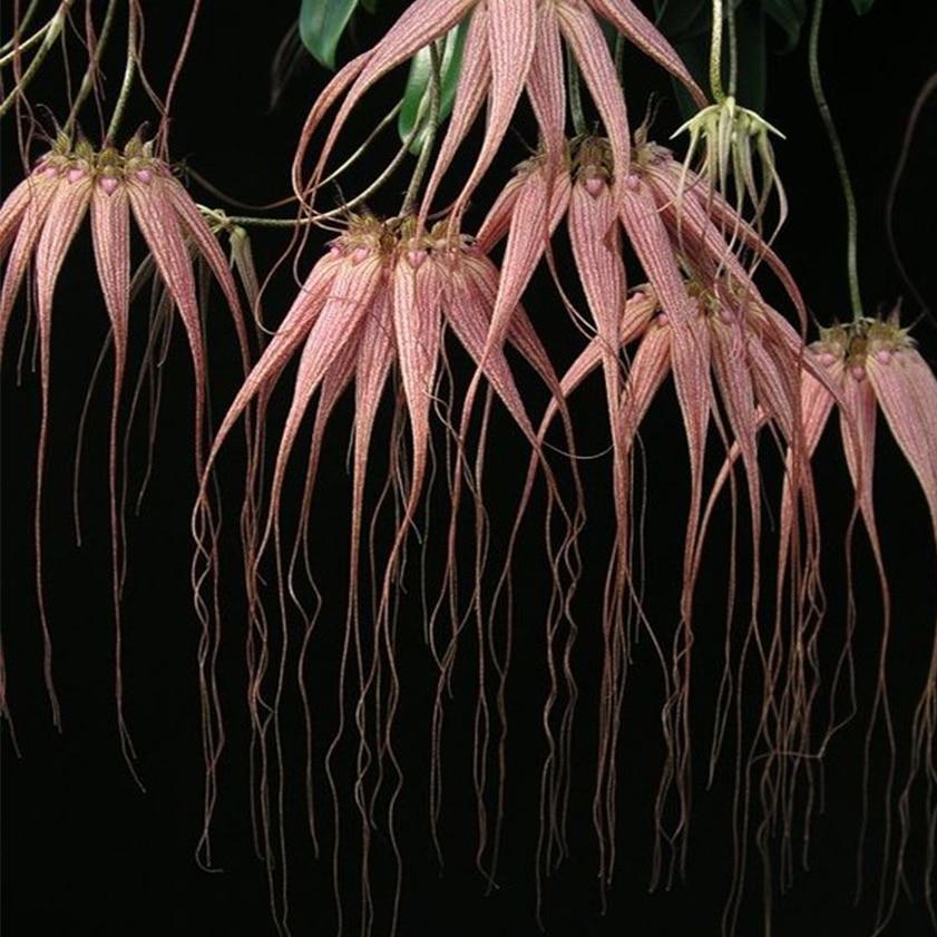 misch_MISCH-indoor-plants-for-your-home-wellbeing